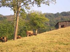 foto casa rural 16